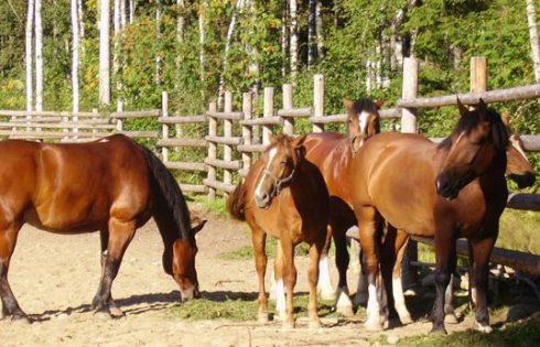 Гадание на замужество по коням.