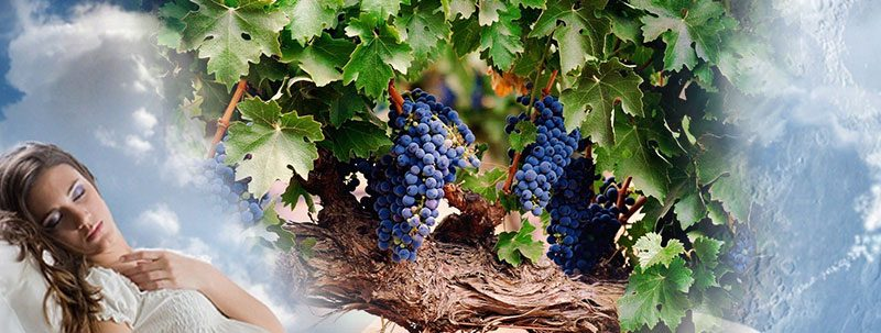 К чему снится виноград?