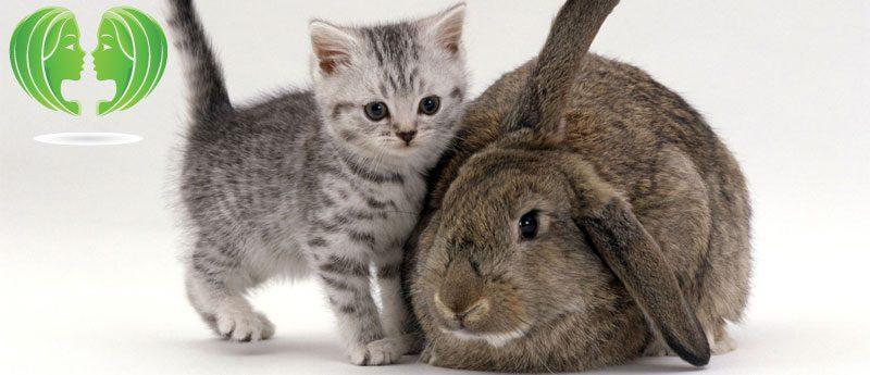 Близнецы в год Кота (Кролика)
