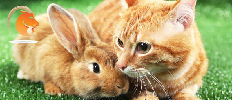 Козерог — Кот (Кролик)