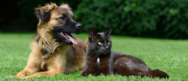 Приметы про кошек и собак